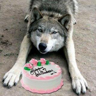 Potevo non mettere un lupo per i tuoi auguri!?! ♥