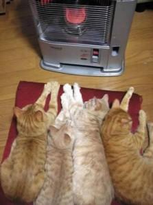 gatti-davanti-la-stufa